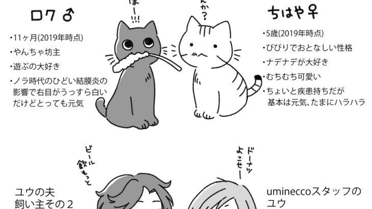 猫たちの自己紹介