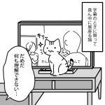 猫とテレビ
