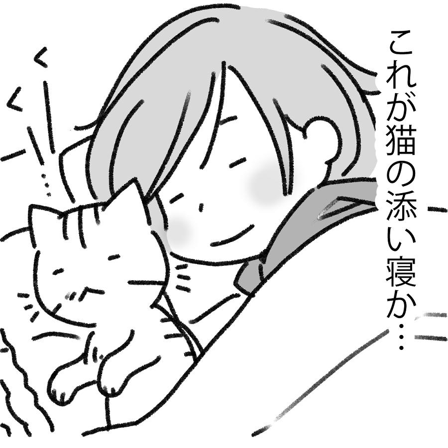 猫の添い寝