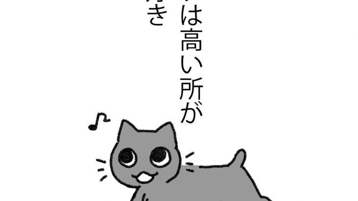 高いところが好きな猫