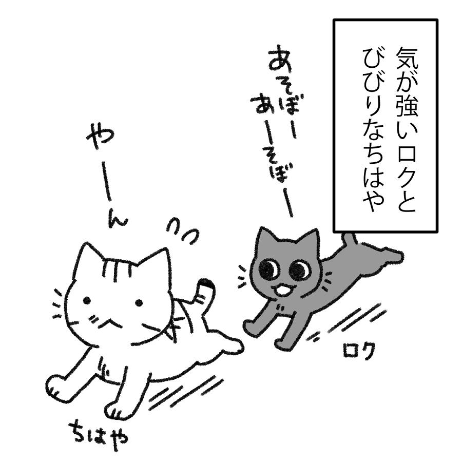 猫とごはん