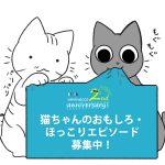 猫ちゃんのおもしろ・ほっこりエピソード募集